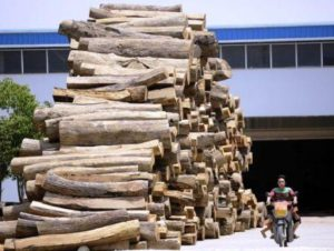 illegal timber in china