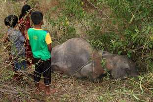Slain elephants are hot news in Sri Lanka