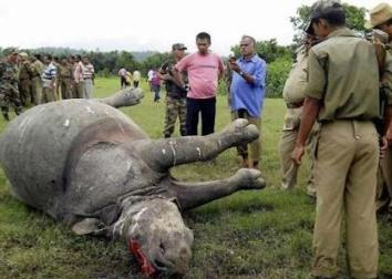 Kaziranga Park becomes Rhino killing field?