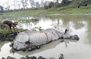 'Old Lady' stuck in mud-pool, dies!