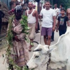 Hooligan Horror as Cow protection!